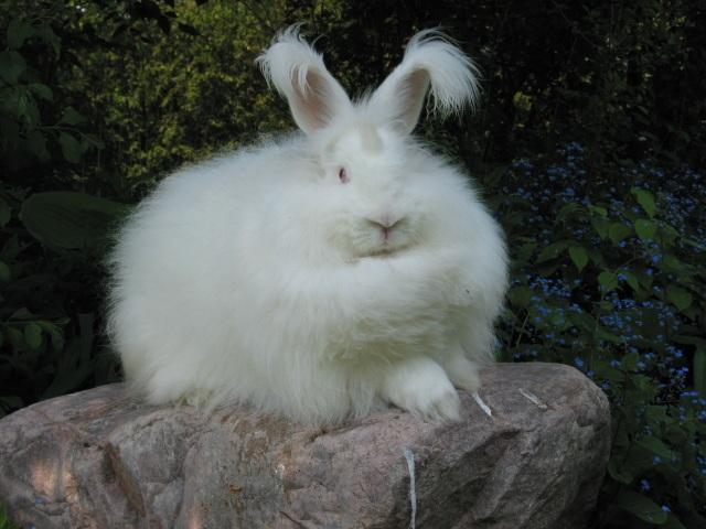 Bunny on Rock
