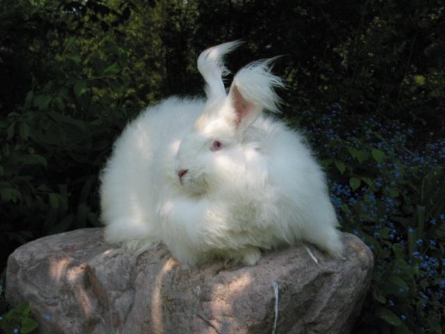 Windsor Farms Rabbit