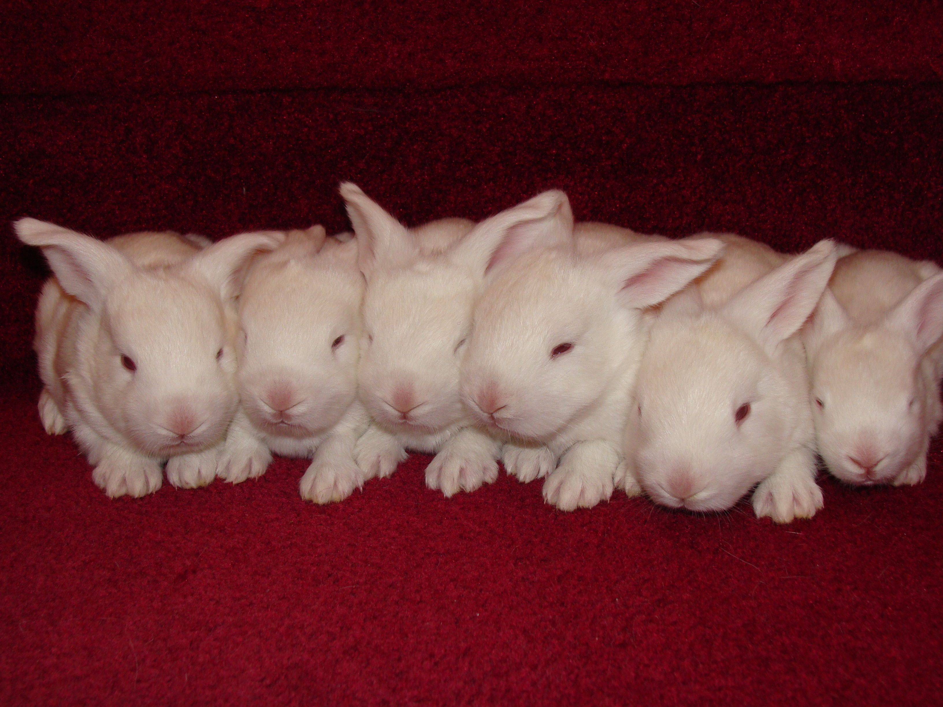 Bunnies on Stairs
